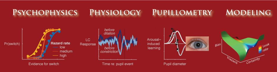 psychophysics, physiology, pupillometry, modeling graphics
