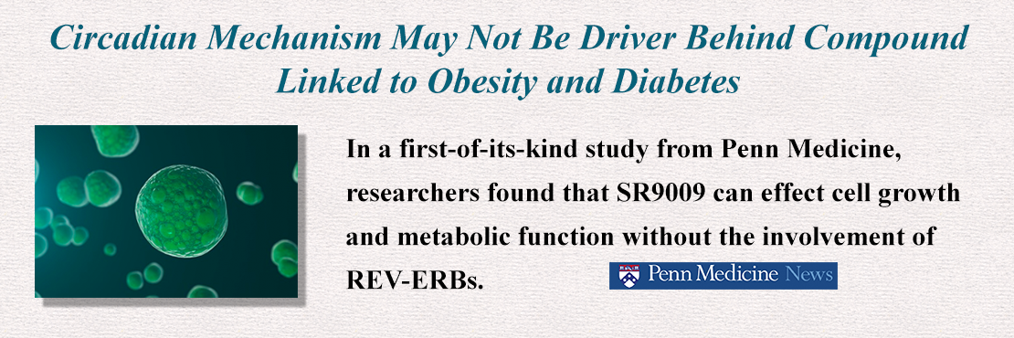 Welcome to the Institute for Diabetes, Obesity and Metabolism